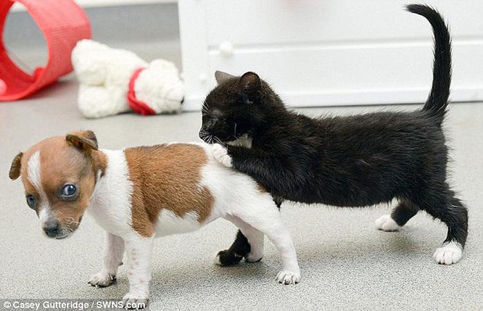 смешные фото щенков и котят 7 (700x450, 137Kb)