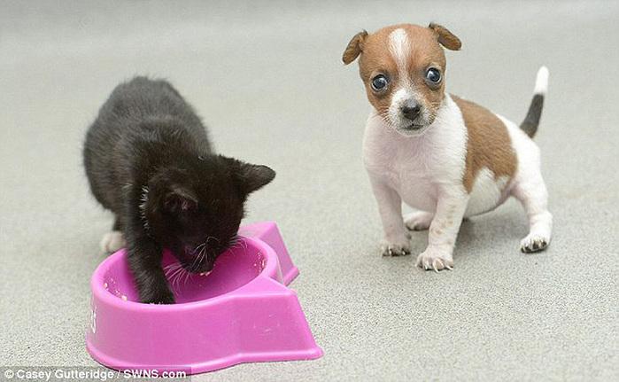 смешные фото щенков и котят 8 (700x431, 107Kb)