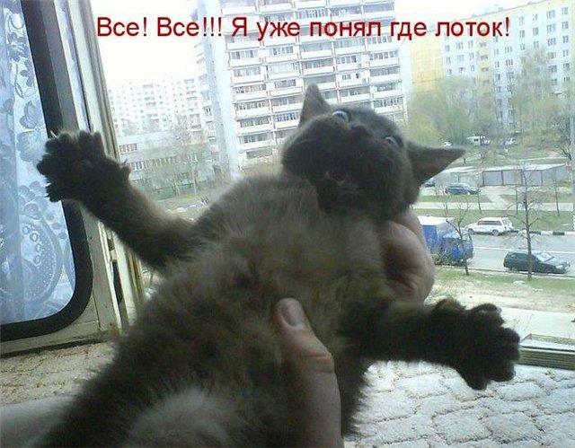 http://img1.liveinternet.ru/images/attach/c/6/92/597/92597409_1350052899_eb1aa6862d05.jpg