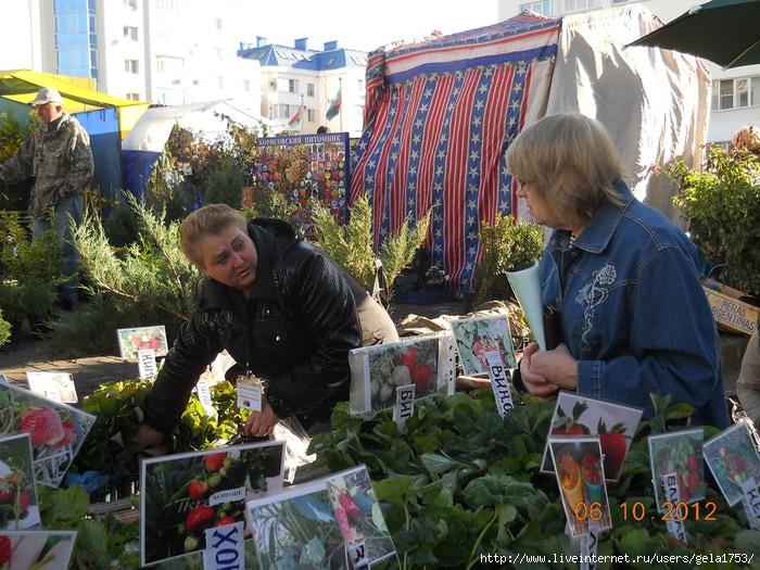 ЭКСПО-Белгород осень 2012 005 (700x525, 309Kb)