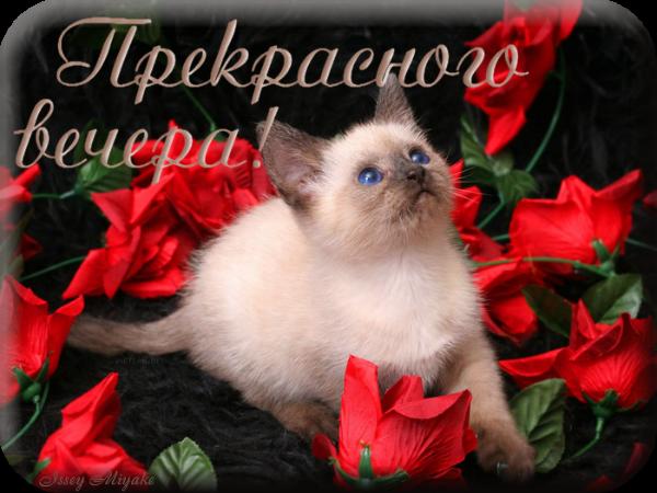 http://img1.liveinternet.ru/images/attach/c/6/92/62/92062547_5Prekrasnogo_vechera.png
