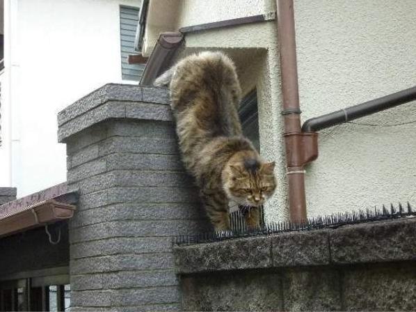 прикольные фото котов и кошек (598x448, 48Kb)
