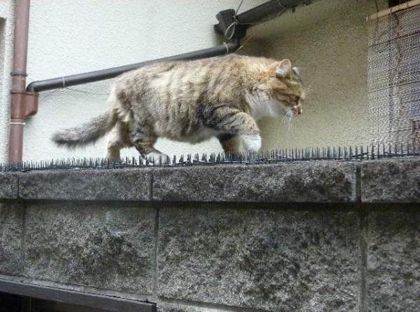 прикольные фото котов и кошек 2 (600x445, 59Kb)