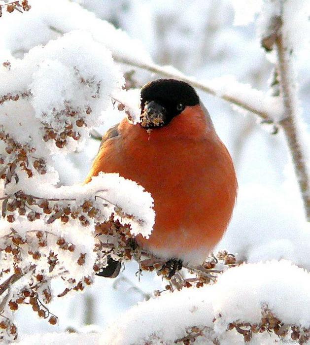 Детские новогодние песни  Песни о зиме  Тексты