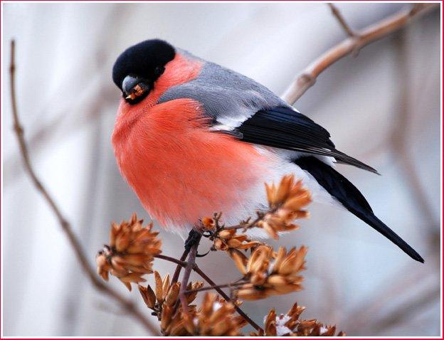 Забавные животные и птицы (41 фото)