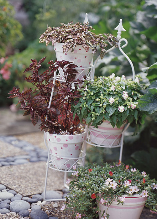 1273232185_container-gardening_lg21 (501x700, 131Kb)