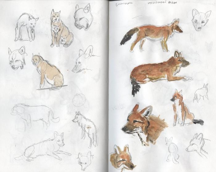 Красный волк рисовать