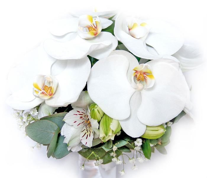 Букет орхидей (700x602, 90Kb)