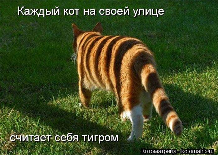 Забавные кошки и котики! кот рыжий в полоску.