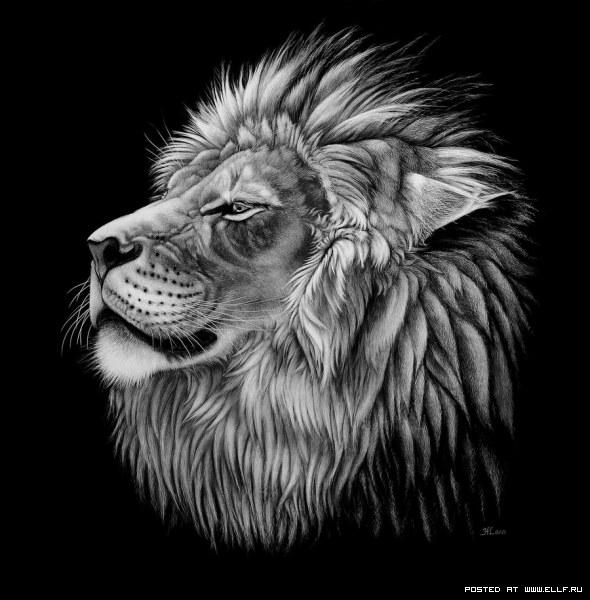 """Оригинал схемы вышивки  """"лев на черном """" ."""