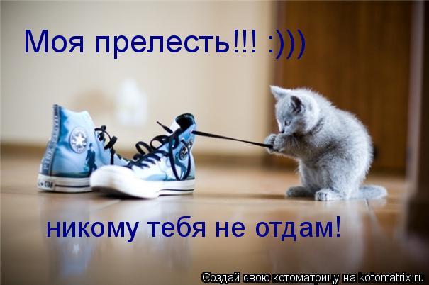 3518263_cattt (605x402, 32Kb)