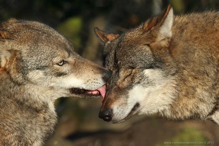 Фотографии диких животных в объективе