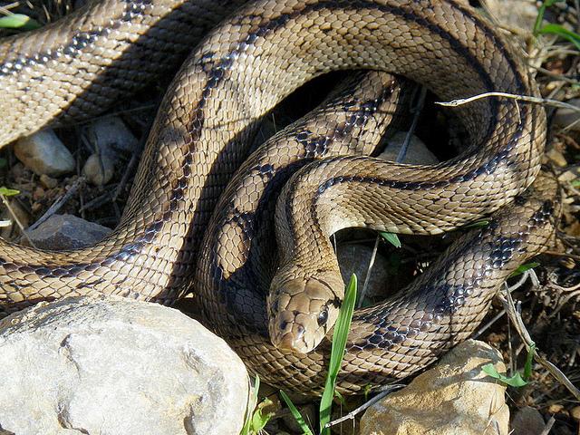 Snake (640x480, 311Kb)