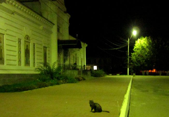 04 2012 09 Таруса Ночная кошка (700x484, 85Kb)