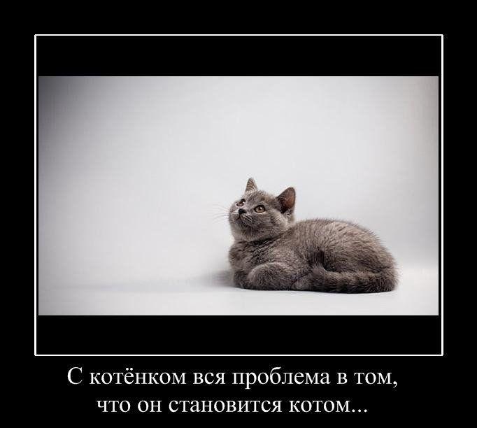demotivatori-o-zhizni-50-foto_5 (682x612, 31Kb)