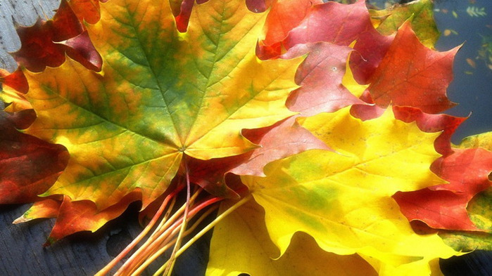 http://img1.liveinternet.ru/images/attach/c/6/92/724/92724265_large_63_size_1920x1080_fallleaves1920120044641024x576.jpg