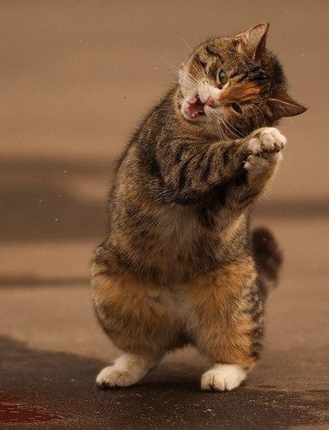 прикольные фото кошек 1 (462x604, 52Kb)