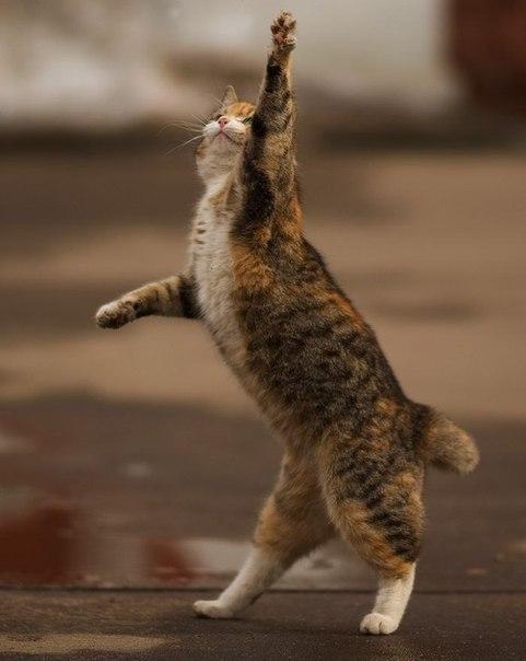 прикольные фото кошек 3 (481x604, 37Kb)