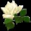 app-wmiEB.cs_32279small (64x64, 7Kb)