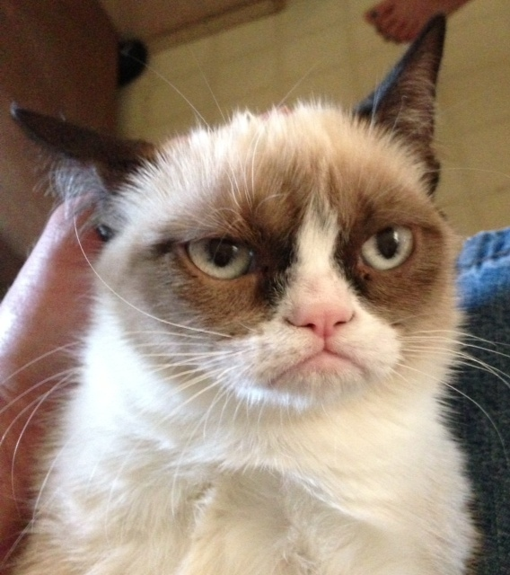 сердитый кот 2 (568x640, 139Kb)