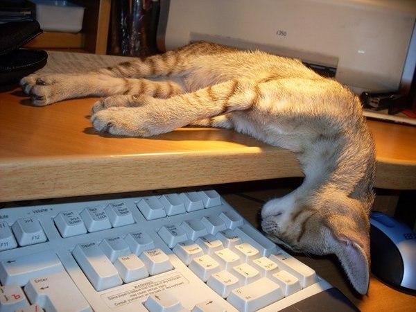 скачать игру про кота на компьютер через торрент бесплатно - фото 3