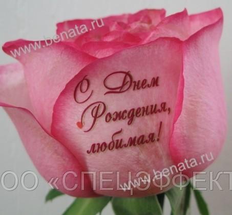 фото цветов с надписями: