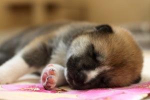 puppy-small (300x200, 19Kb)