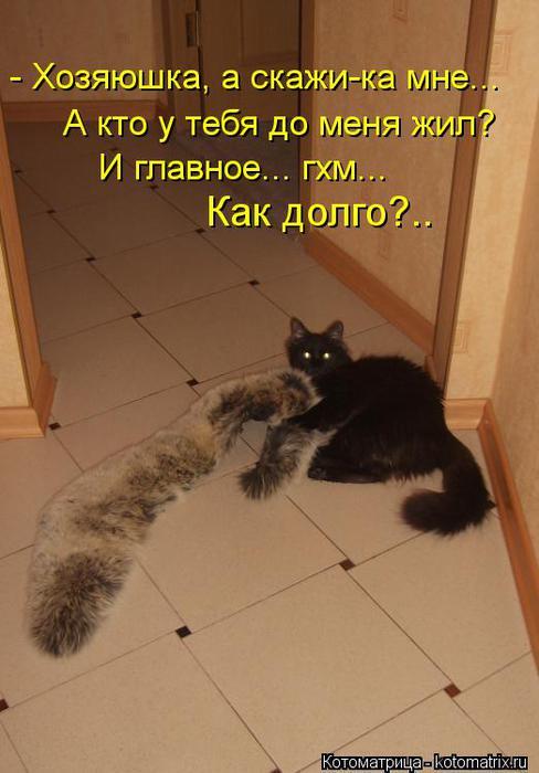 kotomatritsa_k6 (488x700, 41Kb)
