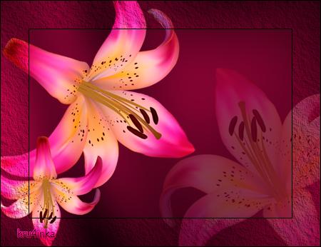 Великолепные-лилии (450x346, 231Kb)
