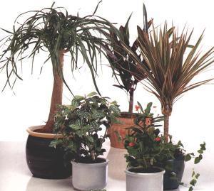 hydroponics-1-1 (300x269, 18Kb)