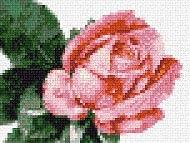 Розочка (190x143, 18Kb)