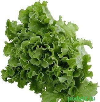 salatnaja_dieta (326x332, 40Kb)