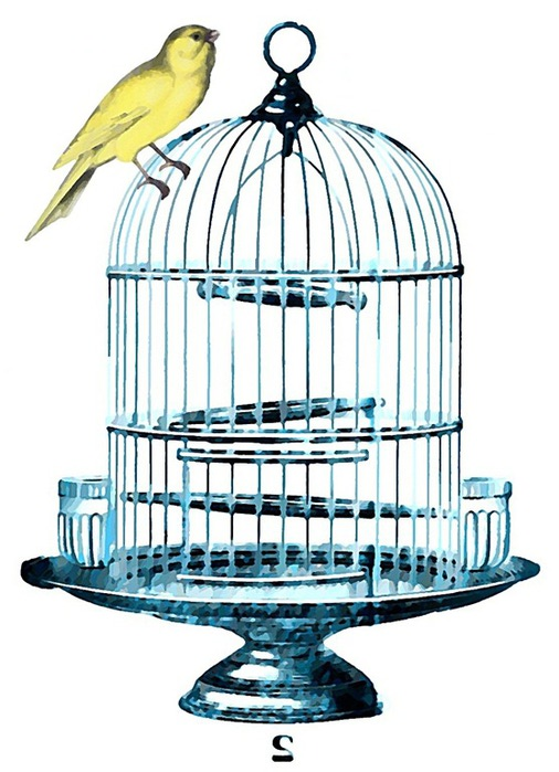 birdcage blue watercolor best transfer_thumb[3] (506x700, 96Kb)
