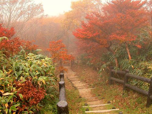 осень в японии1 (500x375, 194Kb)