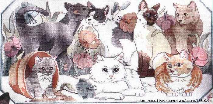 1350812400_1294173719_dimensions00211cats (700x344, 208Kb)
