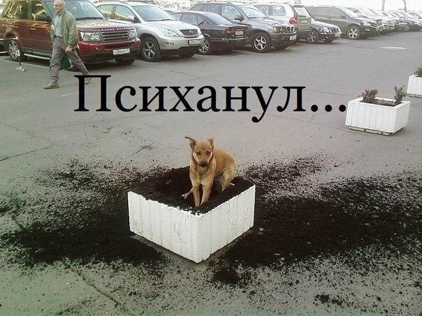 http://img1.liveinternet.ru/images/attach/c/6/92/962/92962957_large_nih4bZDBiq4.jpg
