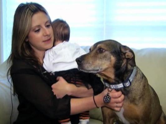 Пёс спас жизнь ребёнку. (533x400, 21Kb)