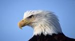 Превью Eagle (5) (700x388, 161Kb)