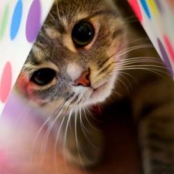 Котик! (250x250, 46Kb)