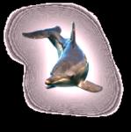 Превью дельфины на прозрачном слое (1) (175x176, 26Kb)