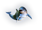 Превью дельфины на прозрачном слое (9) (223x160, 32Kb)