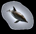 Превью дельфины на прозрачном слое (15) (167x159, 20Kb)