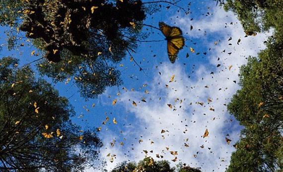 бабочка (570x346, 91Kb)