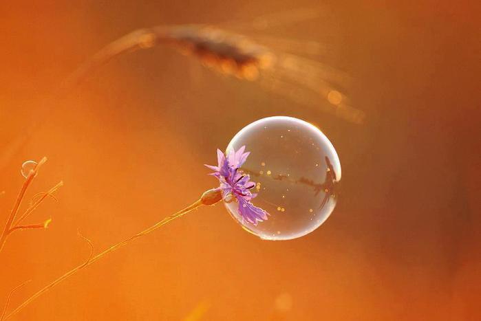 Bubbles Pictures, Bubbles Images, Bubbles Photos - PicShip.