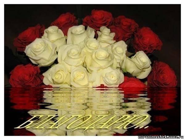 894784607 розы благодарю (600x457, 39Kb)