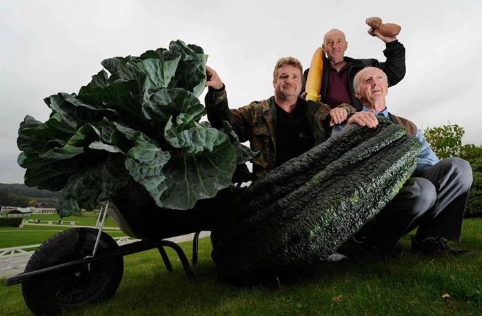 гигантские овощи фото (700x458, 113Kb)