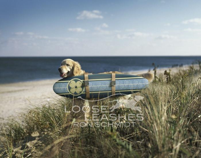 прикольные фото собак Рон Шмидт 3 (700x550, 99Kb)