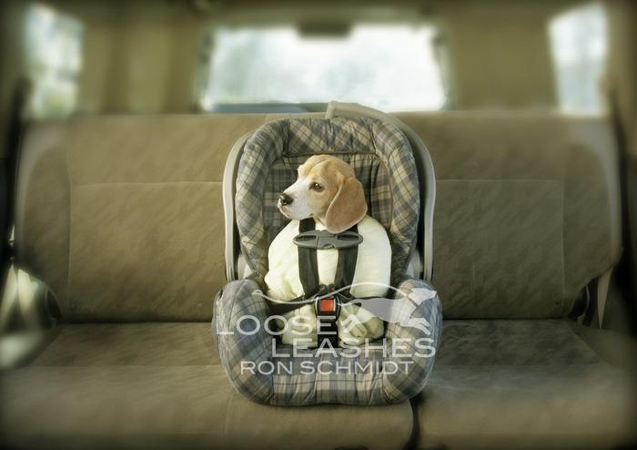 прикольные фото собак Рон Шмидт 5 (700x494, 66Kb)