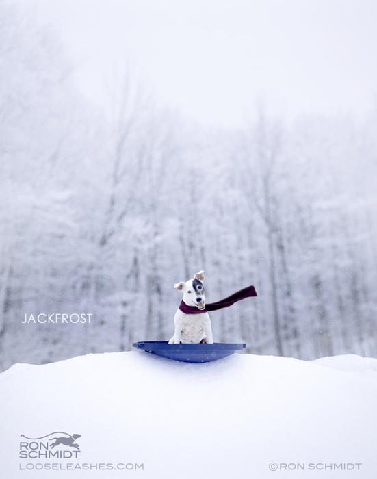 прикольные фото собак Рон Шмидт 13 (551x700, 97Kb)