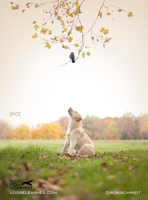 прикольные фото собак Рон Шмидт 14 (518x700, 149Kb)